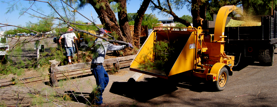 Tree Removal in Tucson